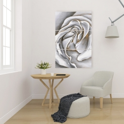 Canvas 24 x 36 - White rose delicate