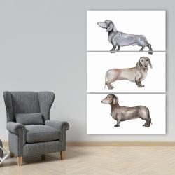Canvas 40 x 60 - Small dachshund dog