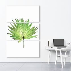 Canvas 40 x 60 - Petticoat palm