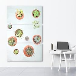Canvas 40 x 60 - Cactus plants