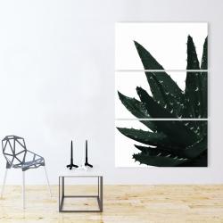 Canvas 40 x 60 - Aloe plant