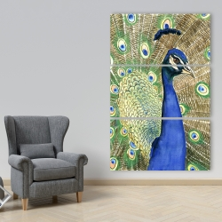 Canvas 40 x 60 - Peacock