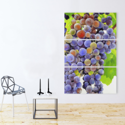 Canvas 40 x 60 - Bunch of grapes