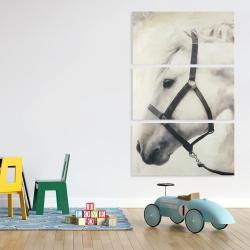 Canvas 40 x 60 - Darius the white horse