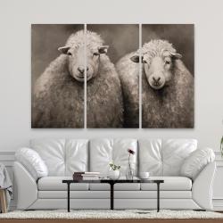 Canvas 40 x 60 - Sheep sepia