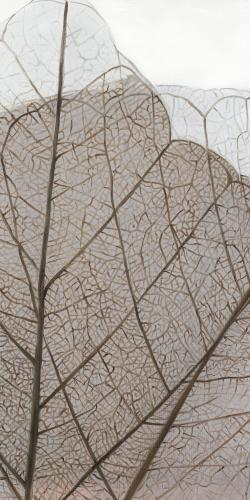 Translucent dried leaves