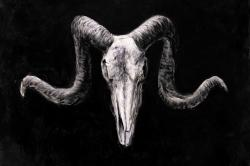 Skeleton skulls grunge style