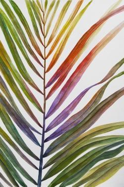 Feuille de palmier tropical