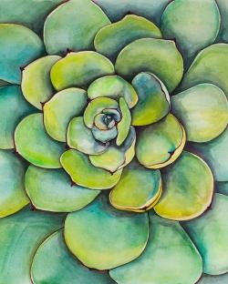 Watercolor succulent plant