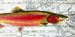 Pink trout on a map