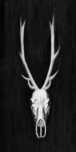 Deer skull on black background