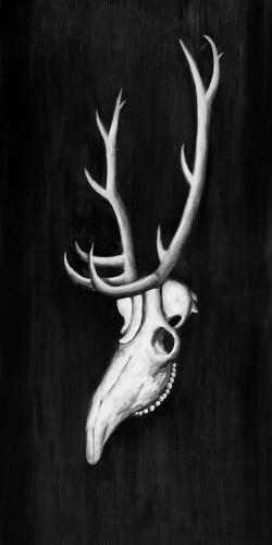 Deer skull in the dark
