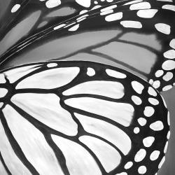 Butterfly wings closeup