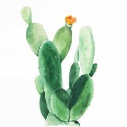 Cactus en fleuraison