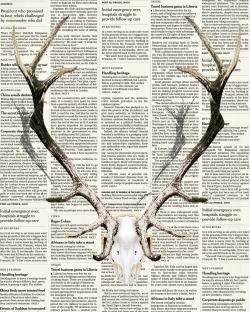 Deer horns on newspaper