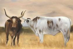 Nguni herd