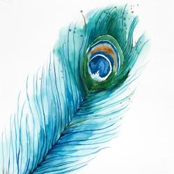 Long peacock feather