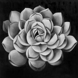 Black and white succulent