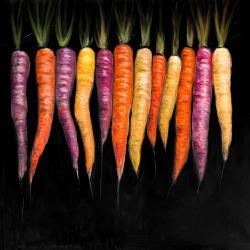 Variétés de carottes