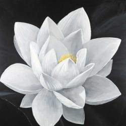 Vue de haut d'une fleur de lotus