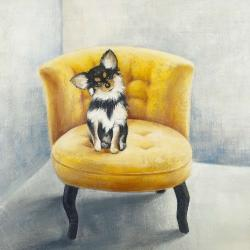 Long-haired chihuahua on a yellow armchair