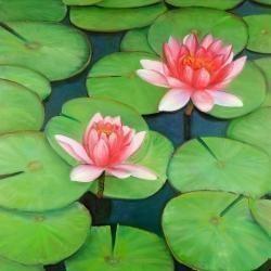 Fleurs de lotus dans un marais