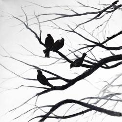Birds and branches silhouette