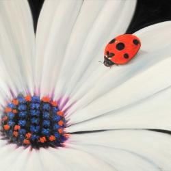 White daisy and ladybug