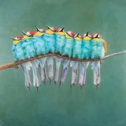 Groupe d'oiseaux sur une branche