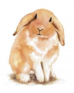 Lop-rabbit