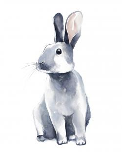 Gray curious rabbit