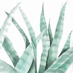 Plante désertique rayée à l'aquarelle