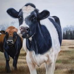 Two cows eating grass