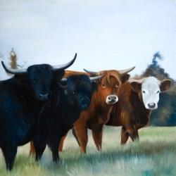 Four highland cows
