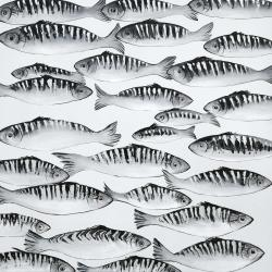 Gray shoal of fish