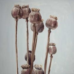 Sepia poppy head plants