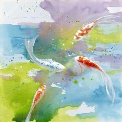 Koi fish in colorful water