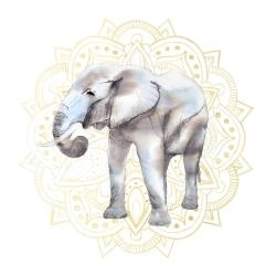 Elephant on mandalas patern