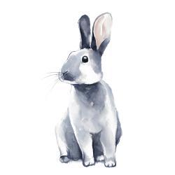 Gray curious rabbit