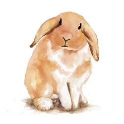 Shy lop-rabbit