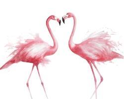 Two pink flamingo watercolor