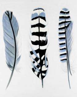 Delicate feathers