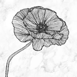 Bright poppy flower