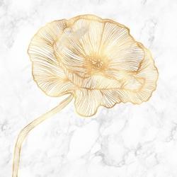 Golden poppy flower