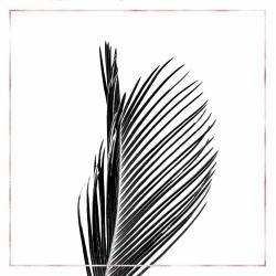 Areca palm with rose line