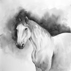Domino le cheval