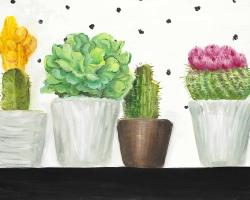 Mini cactus and succulents