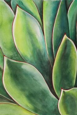 Watercolor agave plant