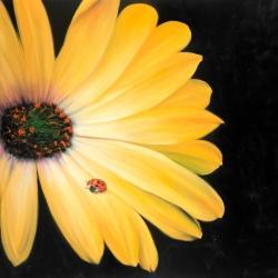 Marguerite jaune et coccinelle