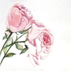 Watercolor pink roses